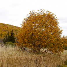 """Margaree Valley, NS • <a style=""""font-size:0.8em;"""" href=""""http://www.flickr.com/photos/111317728@N08/33004899621/"""" target=""""_blank"""">View on Flickr</a>"""