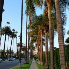 "Walking in Beverly Hills • <a style=""font-size:0.8em;"" href=""http://www.flickr.com/photos/111317728@N08/11640950335/"" target=""_blank"">View on Flickr</a>"