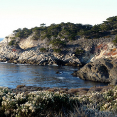 "Point Lobos State Natural Reserve • <a style=""font-size:0.8em;"" href=""http://www.flickr.com/photos/111317728@N08/11637646245/"" target=""_blank"">View on Flickr</a>"